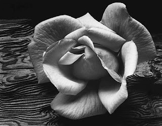 Ansel Adams, Rose and driftwood. 1932
