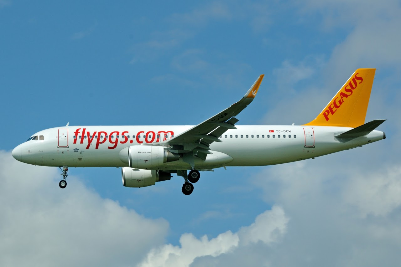 pegasus airlines delighting a new type This is a go ahea own text with you pegasus airline was founded in may 1989– in turkey in 2008 pegasus carried 44 million passenger the people who work here don't think of pegasus as a business.
