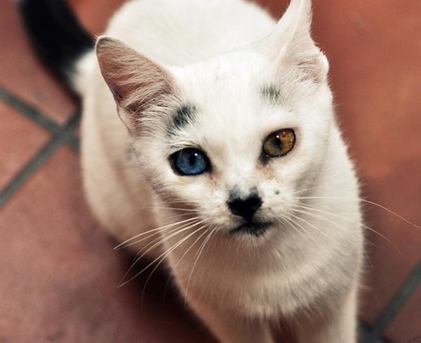 Những chú mèo mang cả dải ngân hà kỳ ảo trong đôi mắt