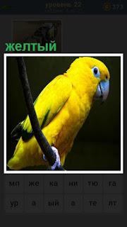 на ветке сидит желтый попугай с крепким клювом
