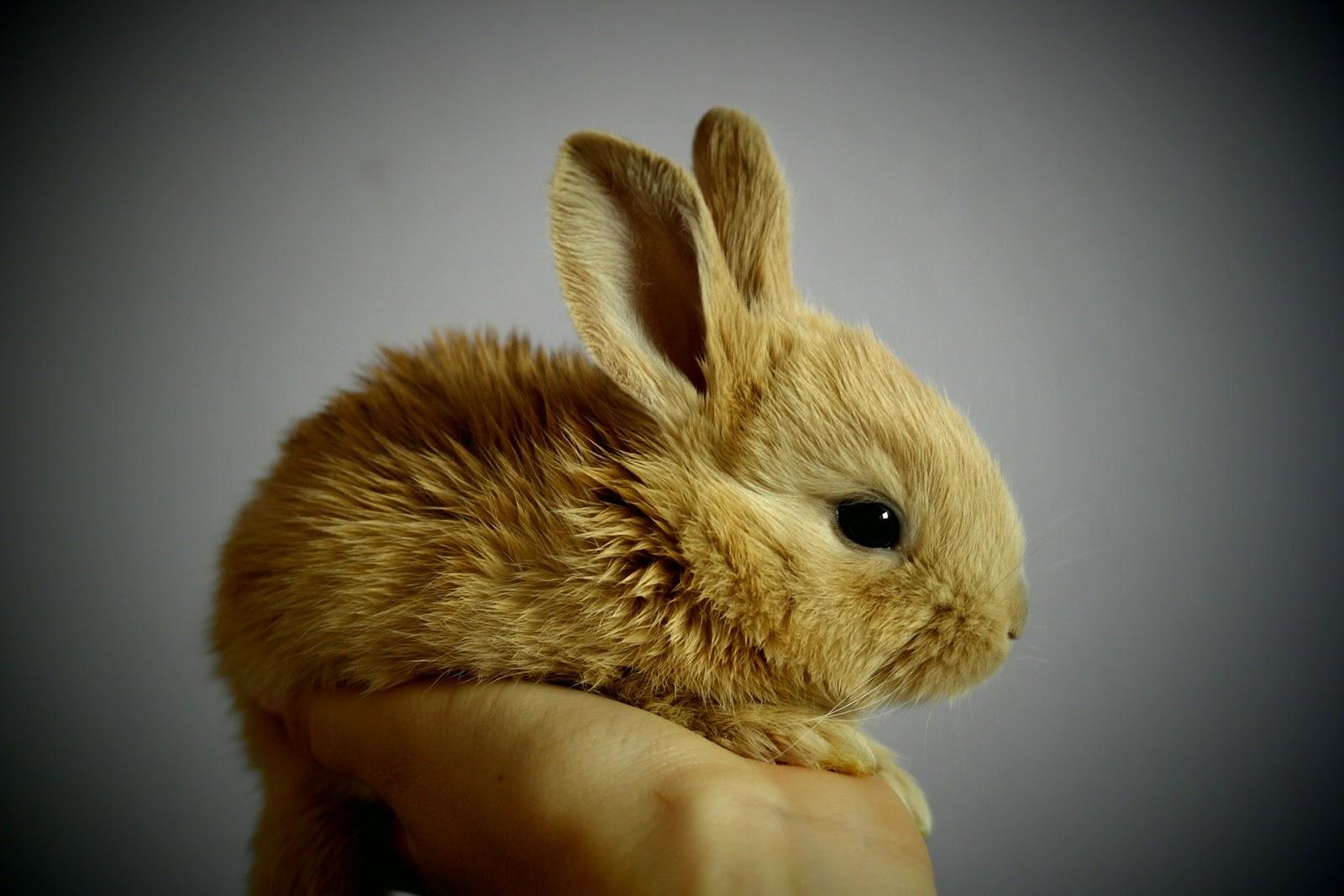 O-DANで発見した掌に乗っている小さな兎の写真