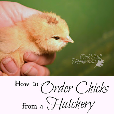 Demystifying the process of ordering chicks from a hatchery.