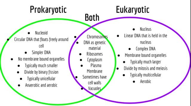 venn diagram for prokaryotic and eukaryotic cells