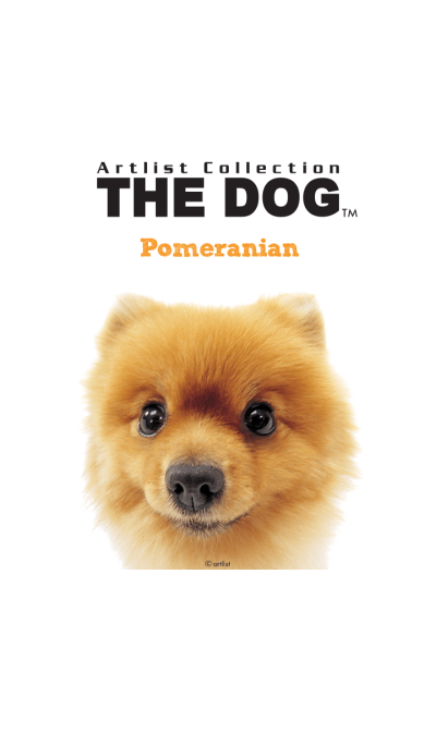 THE DOG Pomeranian