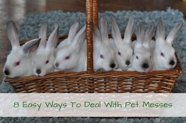 8 Easy Ways To Deal With Pet Messes