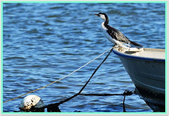 sea birds