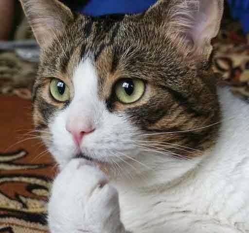 Foto Kucing Lucu Imut Dan Bikin Gemas Jelas Beda