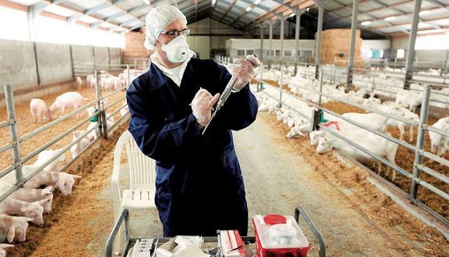 Σύνδεσμος Ελληνικής Κτηνοτροφίας: Ο θεσμός του κτηνιάτρου εκτροφής
