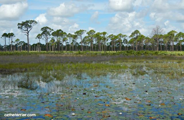 savannas preserve state park florida