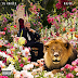 "Stream DJ Khaled's ""Major Key"" (Album)"