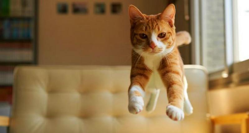 8 tips για χαρούμενες γάτες!