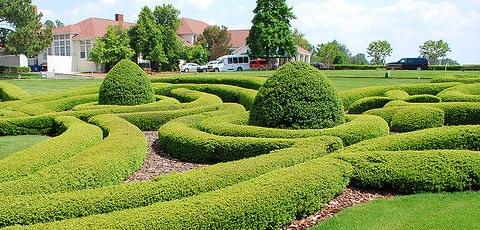 Historias en verde los arboles de la ciudad los rboles for Setos para jardin