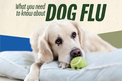 Dog Flu - Canine Influenza Symptoms