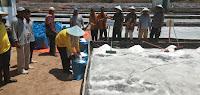 Kementerian KKP Bangga dengan Produksi Garam Bima