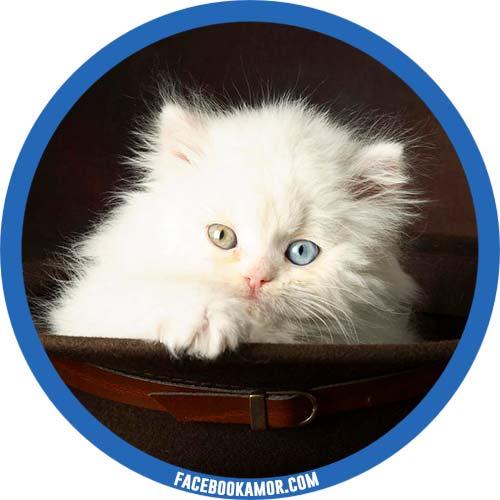 imágenes de gatito para perfil