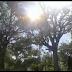 Ocotaleano murió electrocutado cuando podaba un árbol.