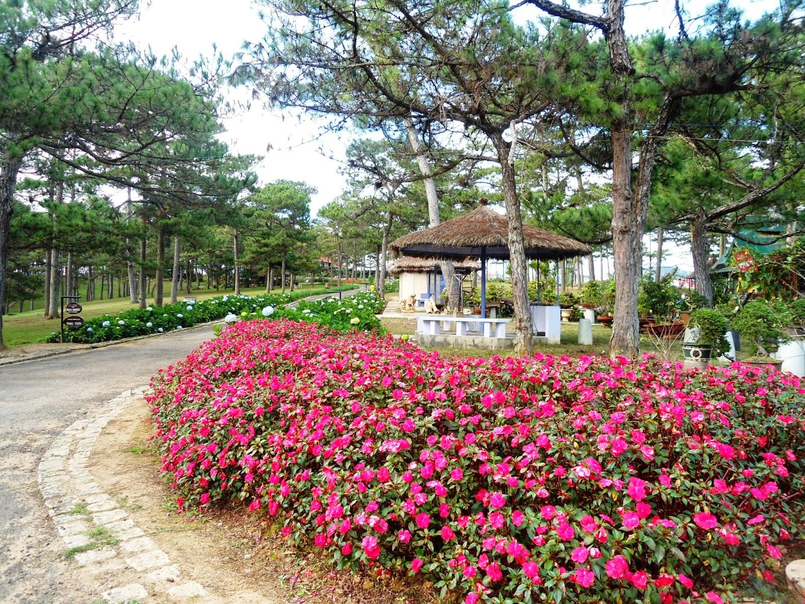 Cùng lúc với việc trồng phủ hoa bất tử trên đồi hoa bên hồ Than Thở thì bên đồi thông hai mộ đối diện bên này trồng phủ tím hoa forget me ...
