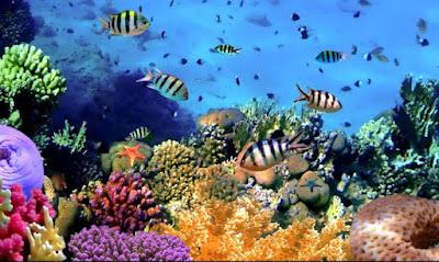 Creme solari possibili danni ai coralli