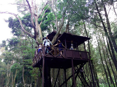 Rumah kayu di hutan pinus