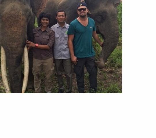Leonardo DiCaprio Kunjungi hHabitat terbaik di Dunia Gajah Sumatera dan Pamer Foto Bareng Gajah Sumatera