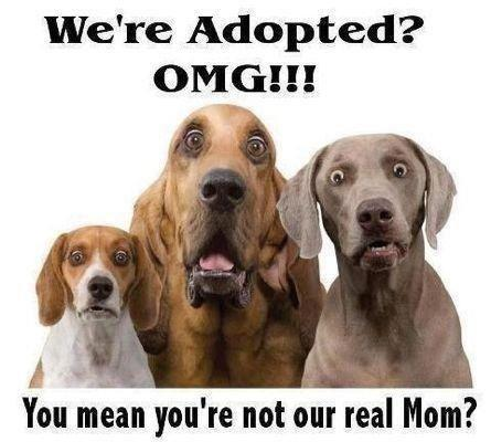 funny pet adoption