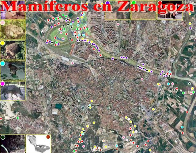 Mamíferos en Zaragoza