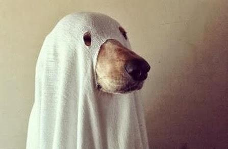 entertaining grace 13 halloween hits entertaining grace & Ghost Dog Costume