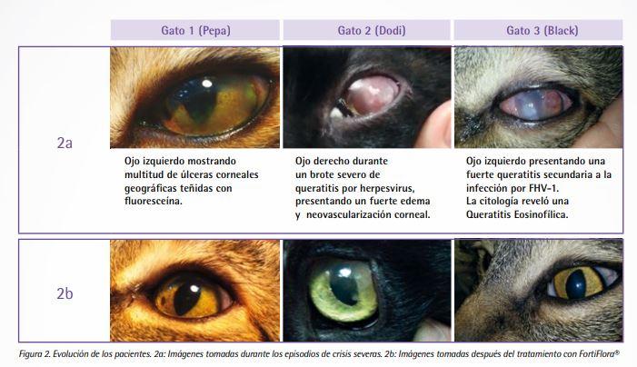 infección de ojo de gato lisina