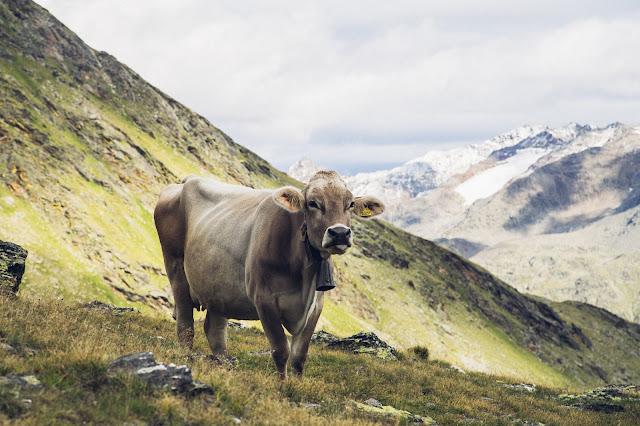 Plattenspitze – Punta delle Laste 3.422m  Bergtour-Martelltal  Wanderung-Martell  Wandern-Südtirol 15
