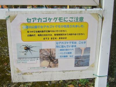 セアカゴケグモに注意