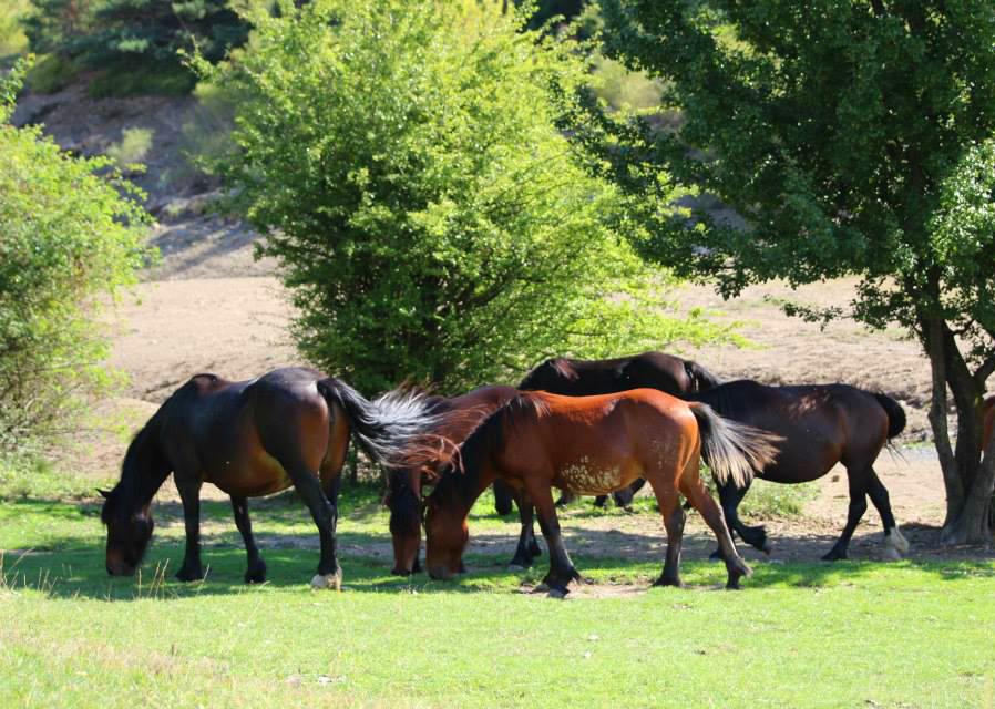 Giochi di cavalli selvaggi e vengo anch io for Giochi di cavalli da corsa
