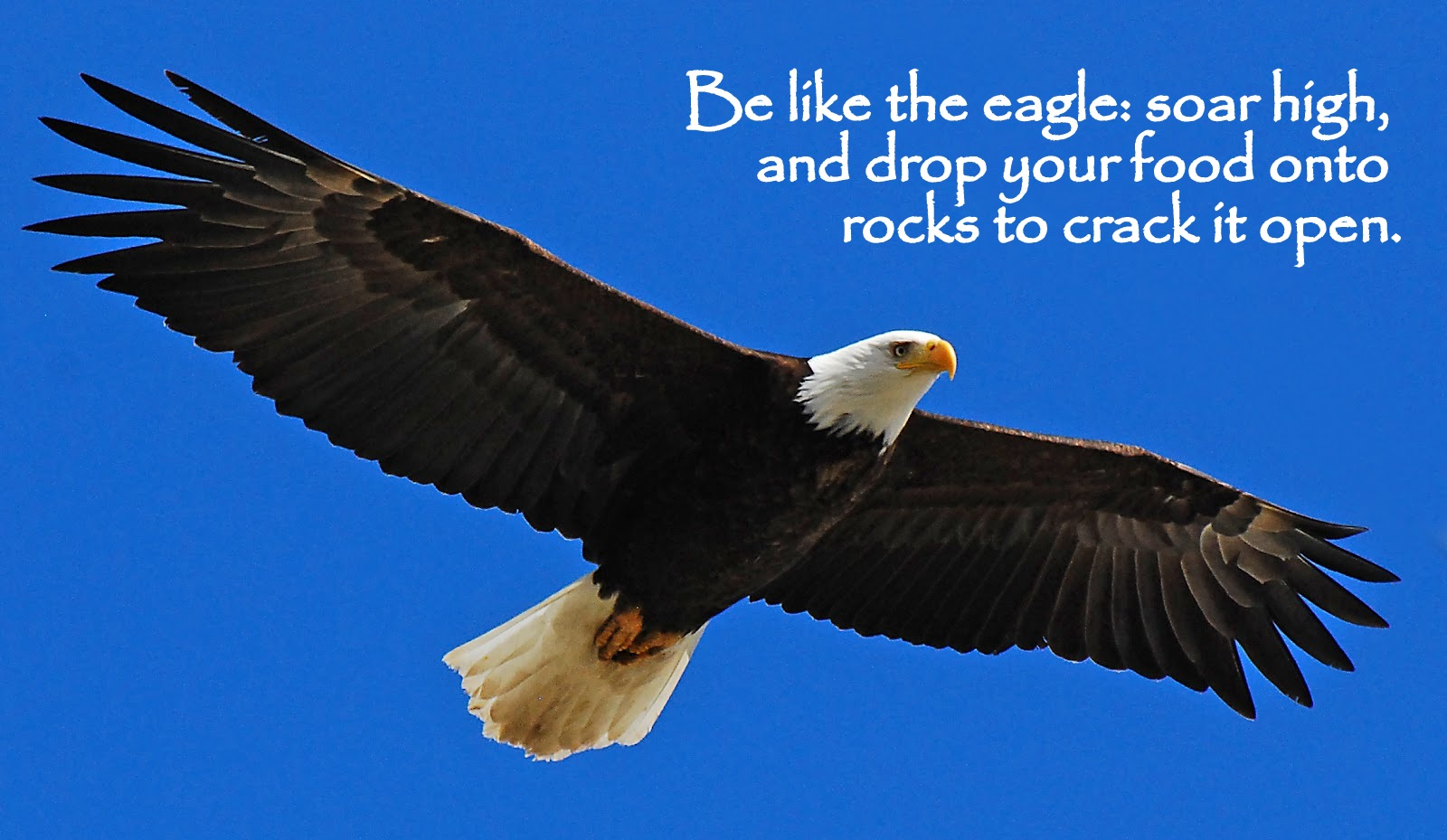 Eagle Sayings And Quotes Best Quotes And Sayings