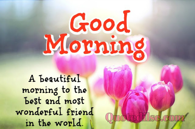 good morning wishes with beautiful flowers