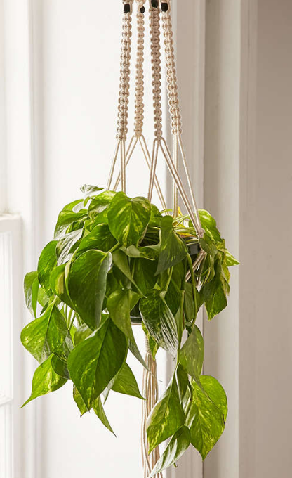 Hanging Plants In Woven Slings On Sale Are Retro Trendyand Fun