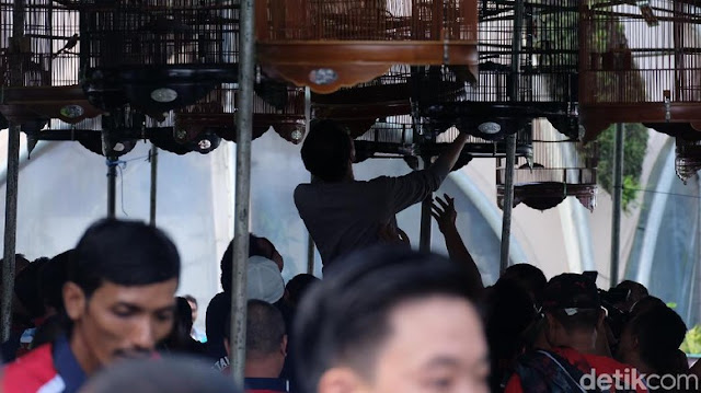 Jokowi menaikkan sangkar burung murai ke tempat perlombaan.