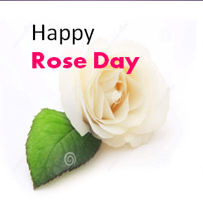 Popular and latest Rose Day Whatsapp DP Images and Status