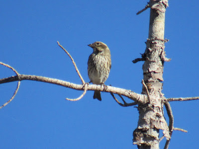 Lassen Volcanic National Park birds