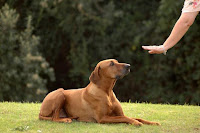Mon avis sur 'Dresser votre chien en 15 minutes par jour' de Caroline Lange