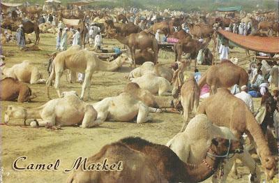 Birqah camel market