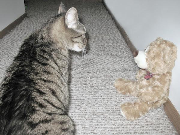 Bear vs. Bear
