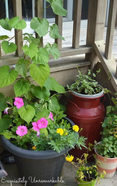 Summer Garden Flower Pots