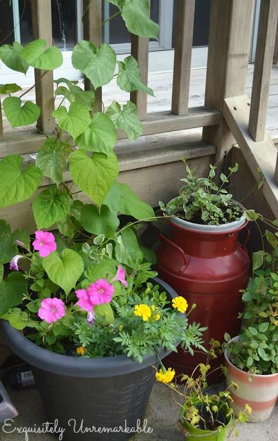 Summer Garden Flower Pots