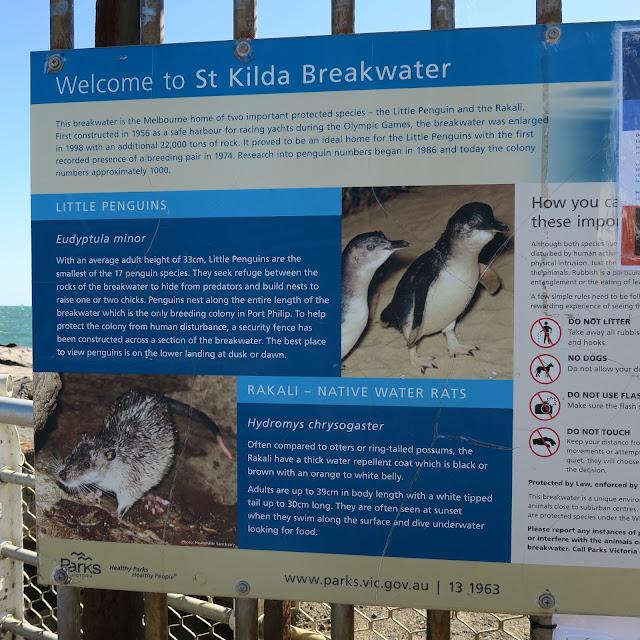penguin breakwater St Kilda's beach, Melbourne