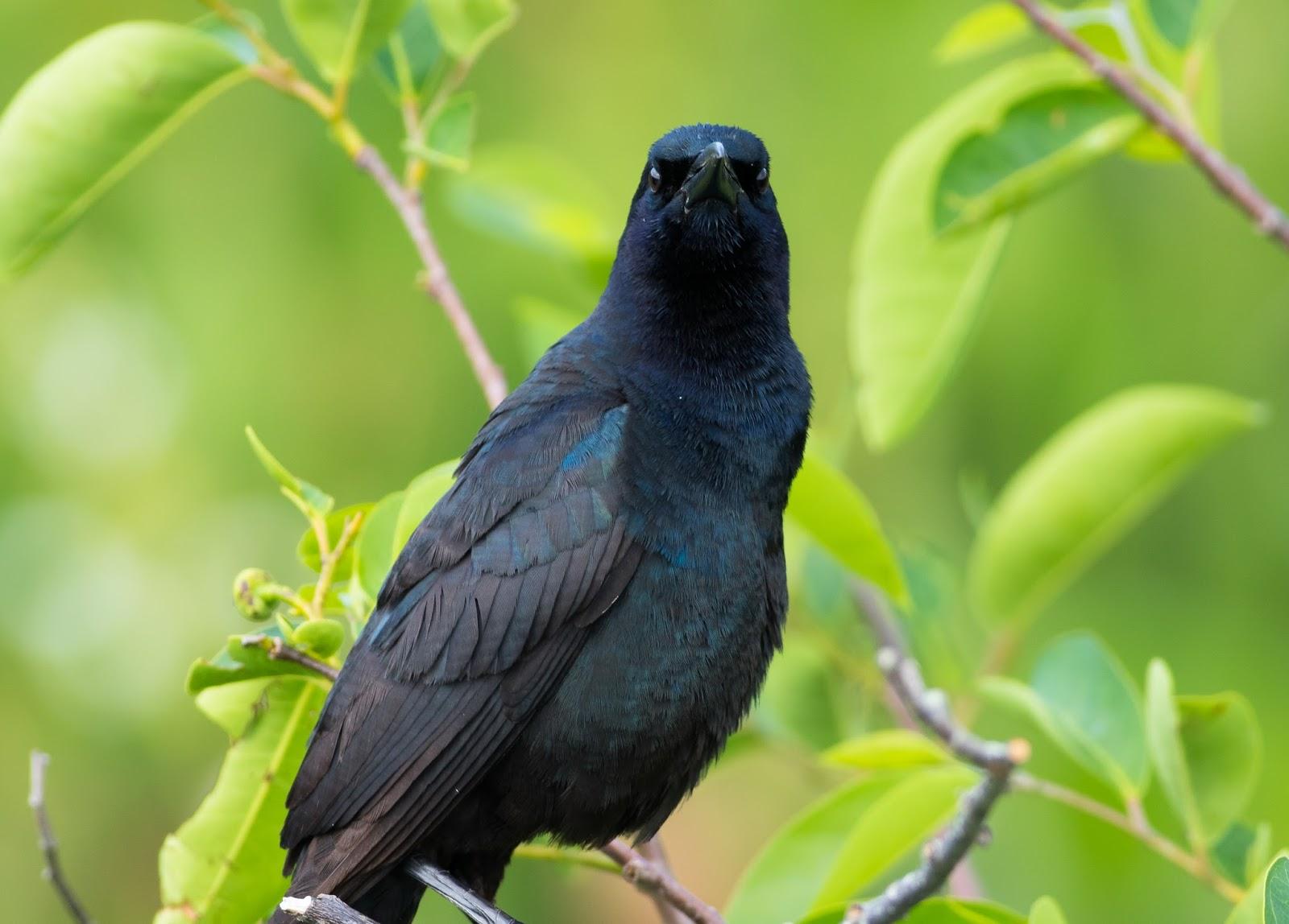 Pixie Birding: Florida Birding Trip Report - Day 13 (Lake ...  Pixie Birding: ...