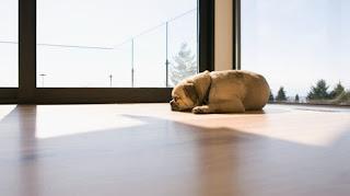 Por que los perros orinan en casa