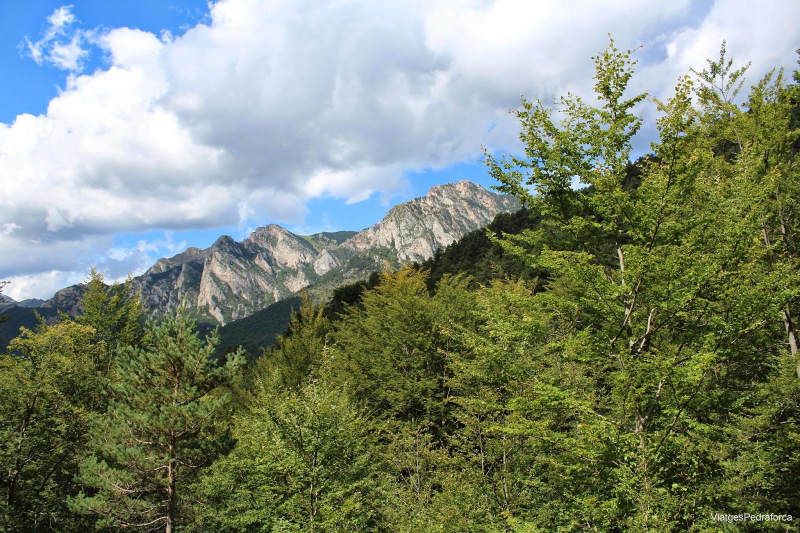 Fageda de Millarès Parc natural del Cadí-Moixeró Alt Berguedà Bagà Serra del Moixeró