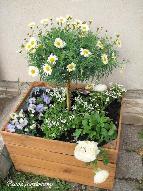 dekoracje do ogrody, drewniana pergola, drewniana donica, donica z desek, drewniana skrzynka, ogród przydomowy