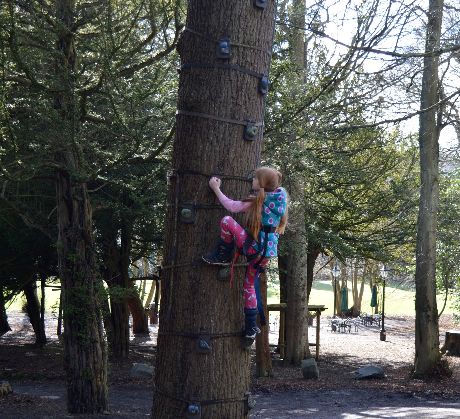 Beamish Wild | School Holiday Club & Activities in County Durham | North East England - tree climbing