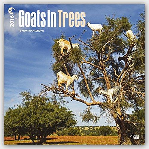 https://4.bp.blogspot.com/-9Y3AKhuWbUY/WTH8kJMcaEI/AAAAAAAADkY/3P0WQHILZg827gsq5skS6stHTYMQwyQHwCLcB/s1600/Goats-in-tree-calendar-2016.jpg