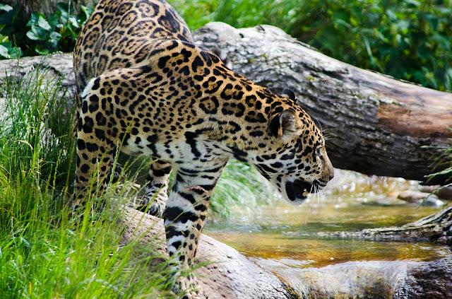 Facts about the Amazon Rainforest, अमेजन वर्षावन से जुड़े रोमांचक तथ्य, अमेजन वर्षावन से जुड़े रोचक तथ्य, अमेज़न के बारे में रोचक बातें, Interesting Facts about Amazon in Hindi
